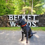 Becket & Otis Real Estate 9
